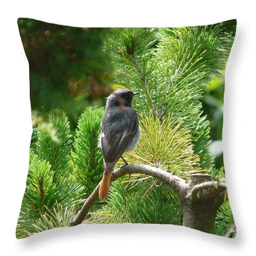 Bird Throw Pillow featuring the photograph Black Redstart by Valerie Ornstein