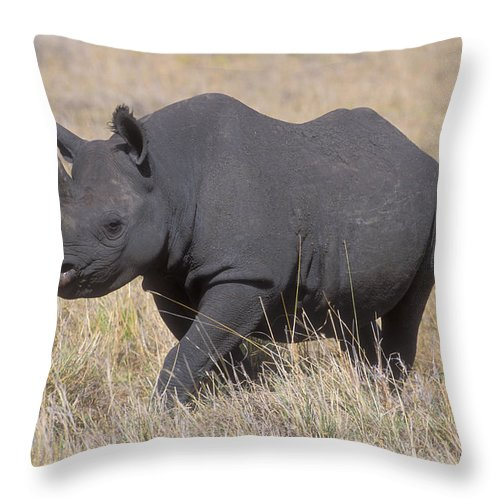 Rhinoceros Throw Pillow featuring the photograph Black Rhino On The Masai Mara by Sandra Bronstein