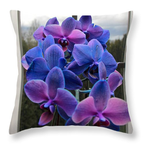 Orchids Throw Pillow featuring the photograph Black Sapphire Orchids by Aaron Berg