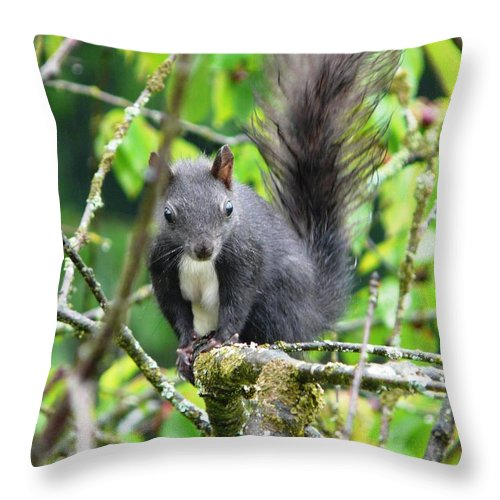 Animal Throw Pillow featuring the photograph Black Squirrel In The Cherry Tree by Valerie Ornstein