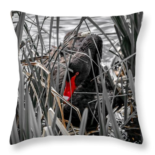 Throw Pillow featuring the photograph Black Swan by Paul Burgoine