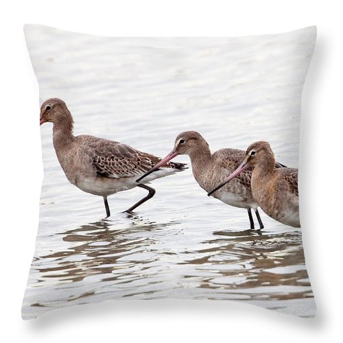Godwit Throw Pillow featuring the photograph Black-tailed Godwits by Bob Kemp