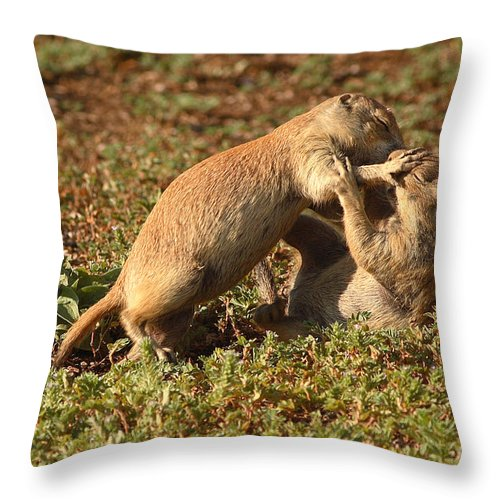 Prairie Dog Throw Pillow featuring the photograph Black-tailed Prairie Dogs Wrestling Around by Max Allen