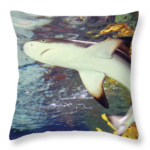 Shark Black Tipped Reef Throw Pillow featuring the photograph Black Tipped Reef Shark-1 by Steve Somerville