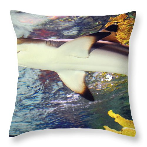 Black Tipped Reef Shark Throw Pillow featuring the photograph Black Tipped Reef Shark by Steve Somerville