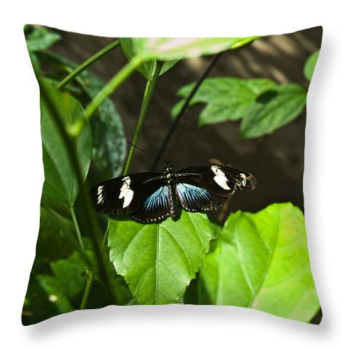 Black Throw Pillow featuring the photograph Black Tropical Butterfly by Douglas Barnett