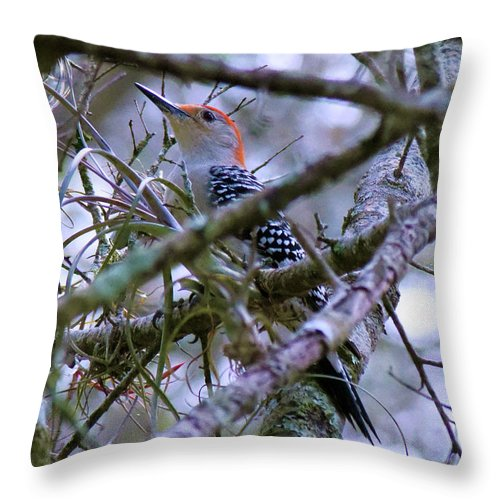 Red Bellied Woodpecker Throw Pillow featuring the pyrography Black With White Polka Dotted Jacket by Sally Sperry