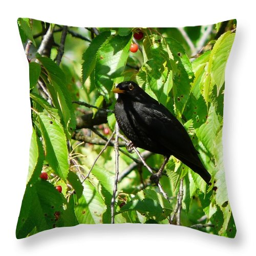 Bird Throw Pillow featuring the photograph Blackbird In The Cherry Tree by Valerie Ornstein