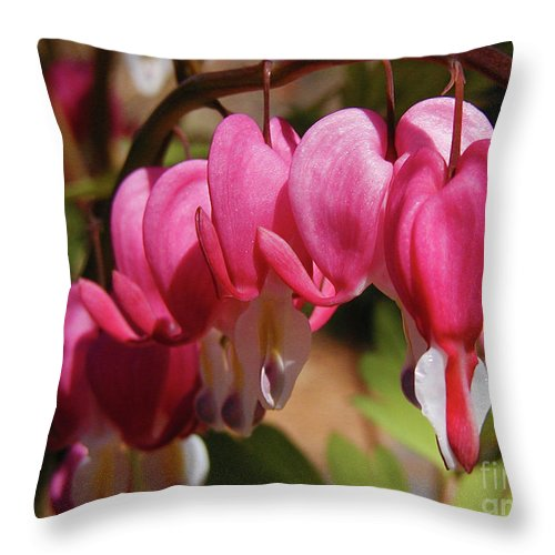 Bleeding Heart Throw Pillow featuring the photograph Bleeding Hearts by Laura Brightwood