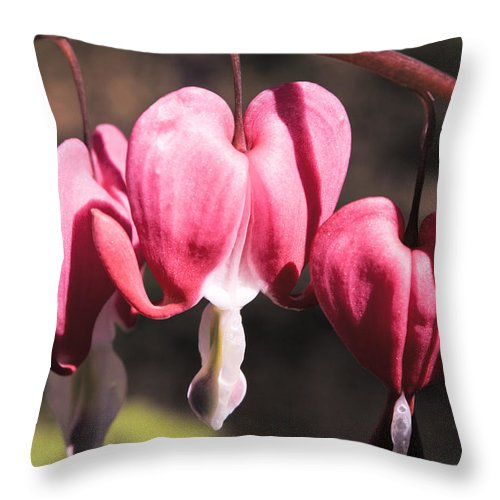 Bleeding Throw Pillow featuring the photograph Bleeding Hearts by Teresa Mucha