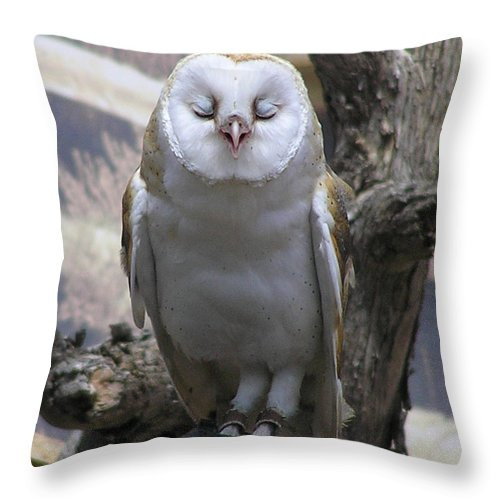 Barn Throw Pillow featuring the photograph Blinking Owl by Louise Magno