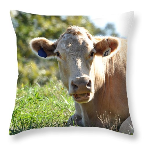 Animals Throw Pillow featuring the photograph Blonde Bombshell by Jan Amiss Photography