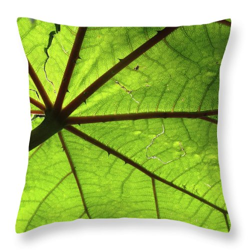 Leaves Throw Pillow featuring the photograph Blood Red Feeder by Trish Hale