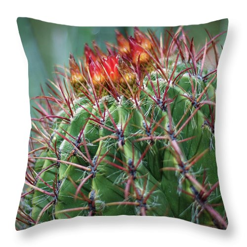 Blooming Cactus Throw Pillow featuring the photograph Bloody Love by Martina Schneeberg-Chrisien