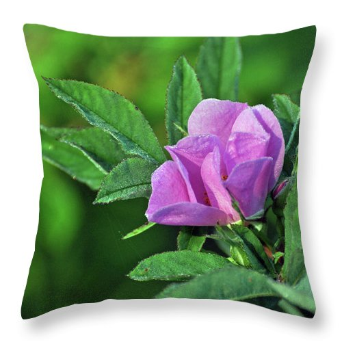 Rose Throw Pillow featuring the photograph Bloomin by Glenn Gordon