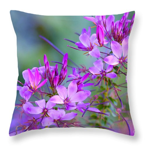 Flower Throw Pillow featuring the photograph Blooming Phlox by Alana Ranney