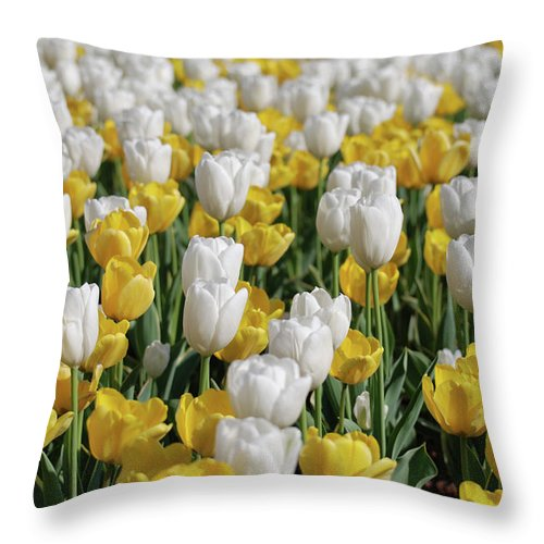 Tulip Throw Pillow featuring the photograph Blooming Tulips As Far As The Eye Can See by DejaVu Designs