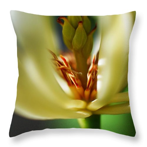 Macr Throw Pillow featuring the photograph Blossom by Catherine Lau