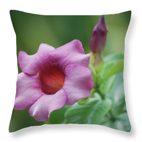 Flower Throw Pillow featuring the photograph Blossom Of Allamanda by Michael Peychich