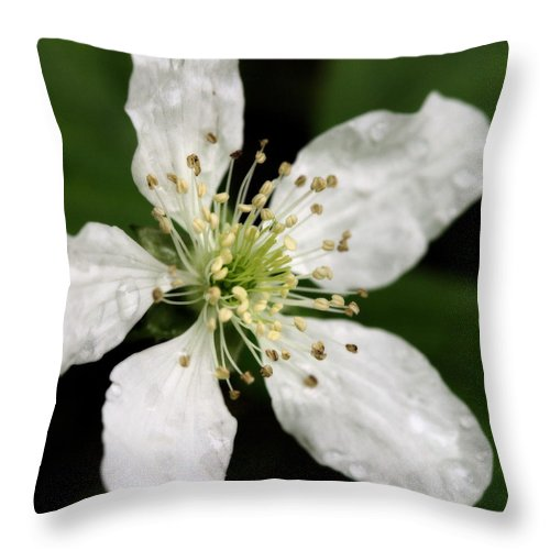 Flower Throw Pillow featuring the photograph Blossom Square by Angela Rath