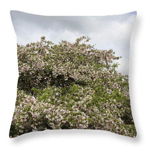 Tree Throw Pillow featuring the photograph Blossoming Tree by Michelle Miron-Rebbe