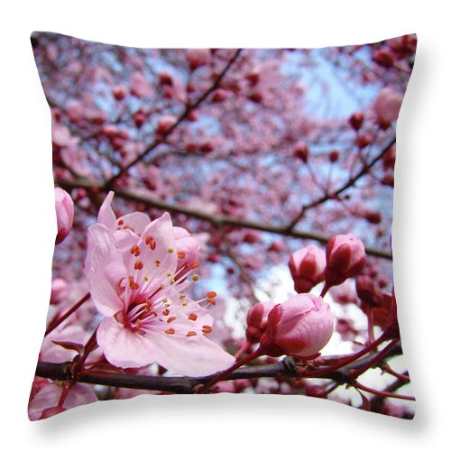 Blossom Throw Pillow featuring the photograph Blossoms Art Blue Sky Spring Tree Blossoms Pink Giclee Baslee Troutman by Baslee Troutman