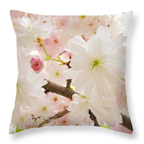 Nature Throw Pillow featuring the photograph Blossoms Art Print 53 Sunlit Pink Tree Blossoms Macro Springtime Blue Sky by Baslee Troutman