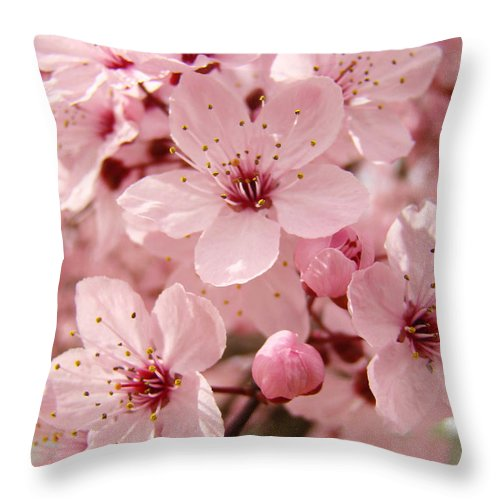 Nature Throw Pillow featuring the photograph Blossoms Art Prints 63 Pink Blossoms Spring Tree Blossoms by Baslee Troutman