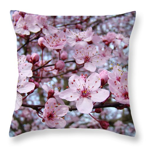 Blossom Throw Pillow featuring the photograph Blossoms Art Prints Nature Pink Tree Blossoms Baslee Troutman by Baslee Troutman