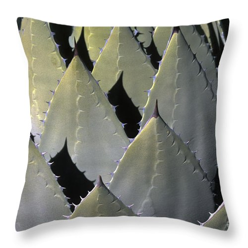Cactus Throw Pillow featuring the photograph Blue Agave Cactus by Sandra Bronstein