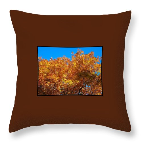 Trees Throw Pillow featuring the photograph Blue And Gold by Betty Buller Whitehead