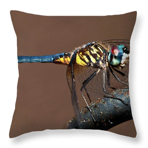 Dragonfly Throw Pillow featuring the photograph Blue And Gold Dragonfly by Christopher Holmes