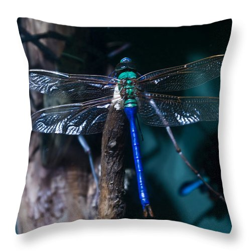 Blue Throw Pillow featuring the photograph Blue And Green Dragonfly by Douglas Barnett