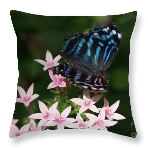 Butterfly Throw Pillow featuring the photograph Blue And Pink Make Lilac by Shelley Jones