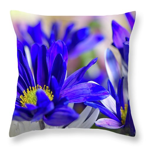 Blue And White Throw Pillow featuring the photograph Blue And White by Sharon Talson