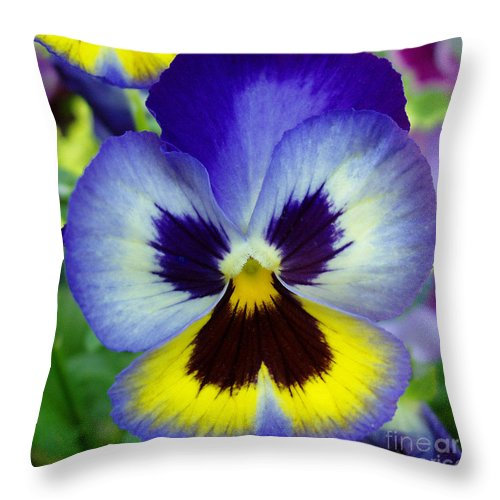 Flowers Throw Pillow featuring the photograph Blue And Yellow Pansy by Nancy Mueller