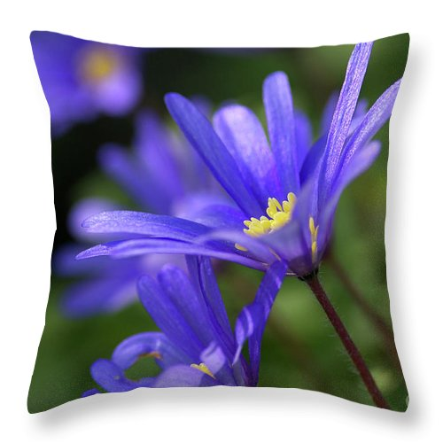 Anemone Throw Pillow featuring the photograph Blue Anemone by Sharon Talson