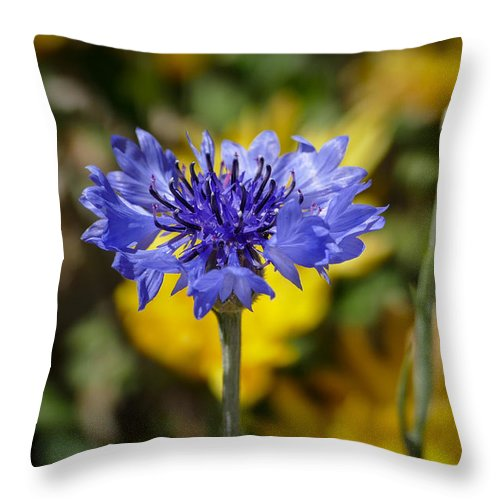 Nature Throw Pillow featuring the photograph Blue Boy by Laurel Powell