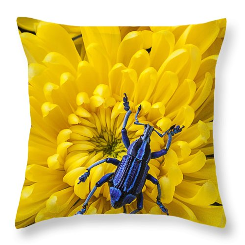 Blue Throw Pillow featuring the photograph Blue Bug On Yellow Mum by Garry Gay