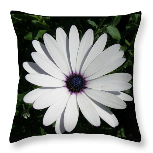 Daisy Throw Pillow featuring the photograph Blue Center Daisy by Valerie Ornstein