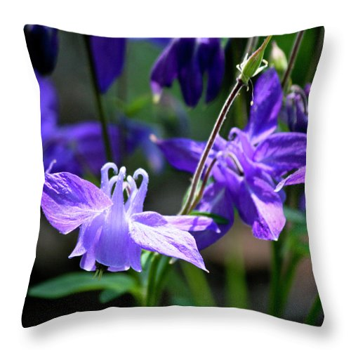 Columbine Throw Pillow featuring the photograph Blue Columbine Squared 3 by Teresa Mucha