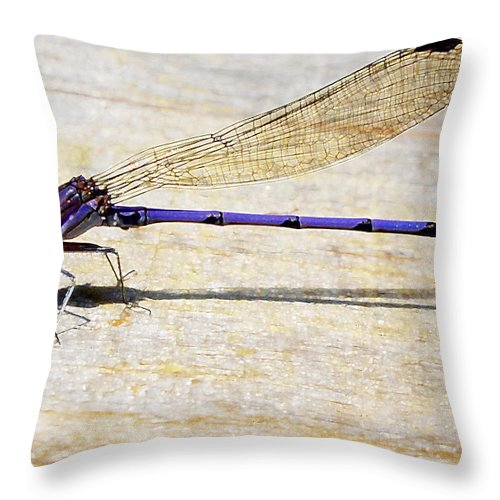 Insect Throw Pillow featuring the photograph Blue Damselfly by Margie Avellino
