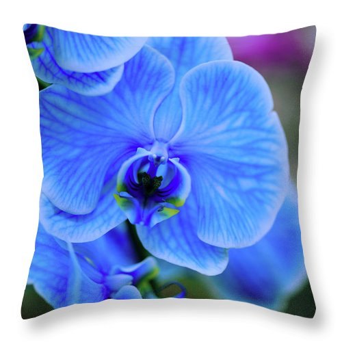 Orchids Throw Pillow featuring the photograph Blue Diamond by June Marie Sobrito