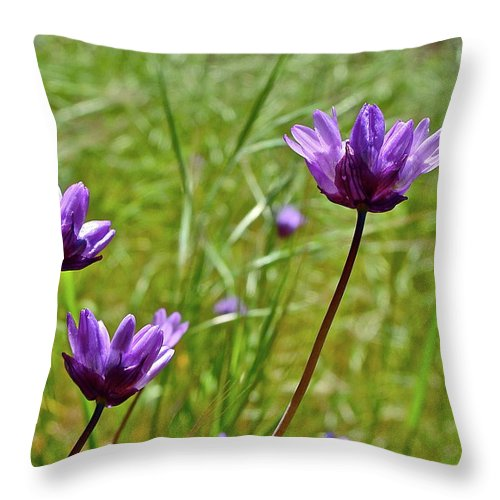 Flowers Throw Pillow featuring the photograph Blue Dicks by Diana Hatcher