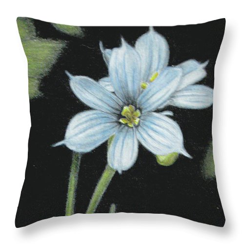 Fuqua - Artwork Throw Pillow featuring the drawing Blue Eyed Grass - 2 by Beverly Fuqua