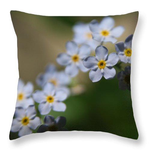 Blue Flowers Throw Pillow featuring the photograph Blue Flowers by Paul Tokarchuk