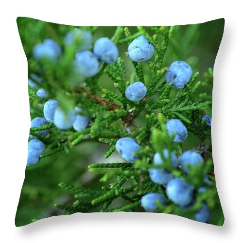 Juniper Throw Pillow featuring the photograph Blue by Gaby Swanson