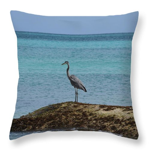 Mexico Throw Pillow featuring the photograph Blue Heron by Christina McNee-Geiger