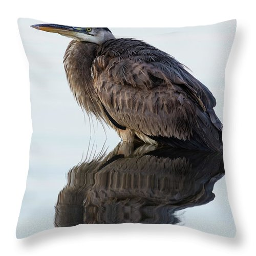 Blue Heron Throw Pillow featuring the photograph Blue Heron In Reflection, St. Marks Wildlife Refuge, Florida by Dawna Moore Photography