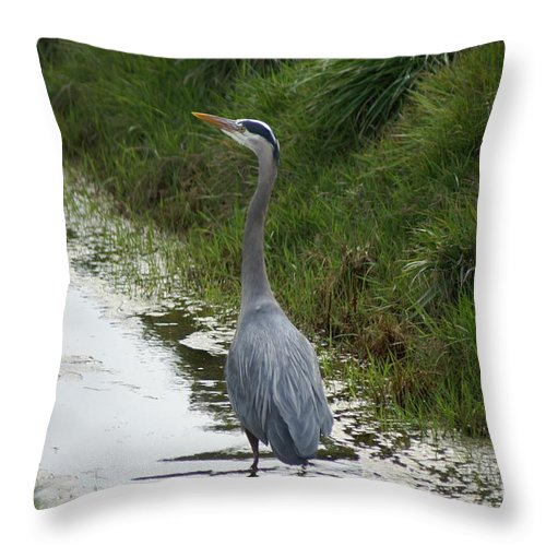 Heron Throw Pillow featuring the photograph Blue Heron by Louise Magno